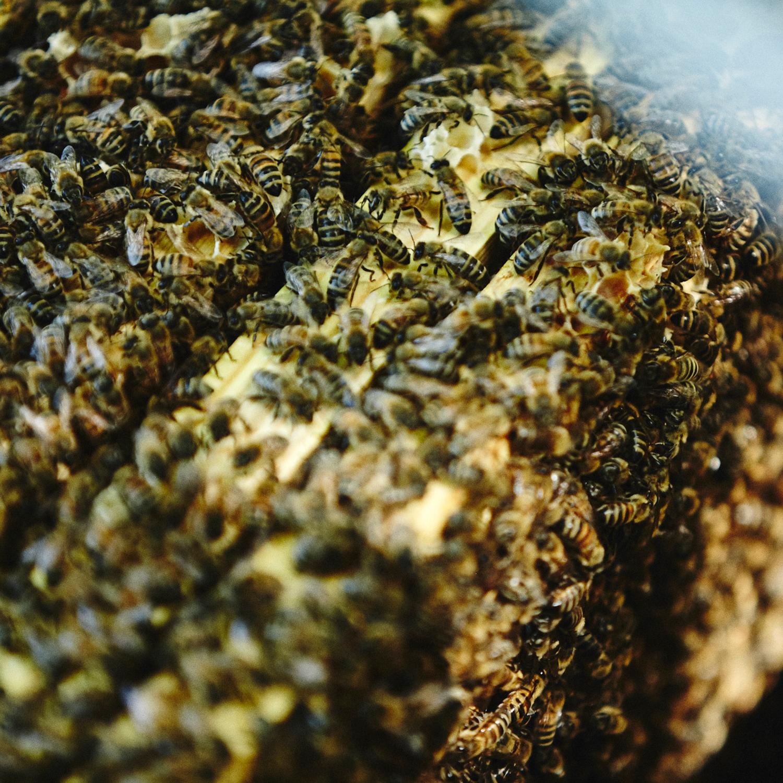 Full colony of honeybees (deposit) - LOCAL HONEY MAN