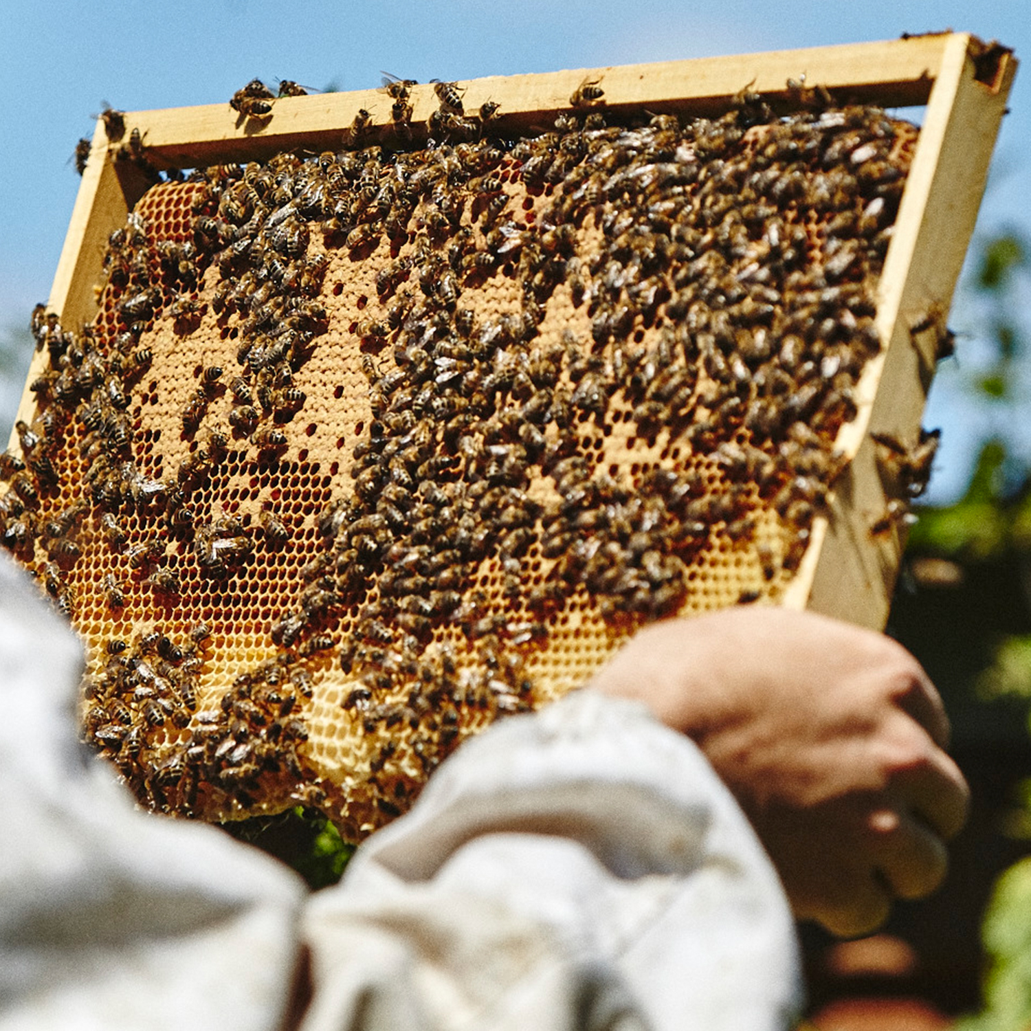 British Honey Bees for Sale - National Nuc