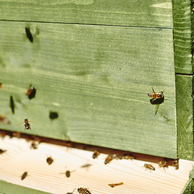 Complete beehive with honeybees (deposit) - LOCAL HONEY MAN
