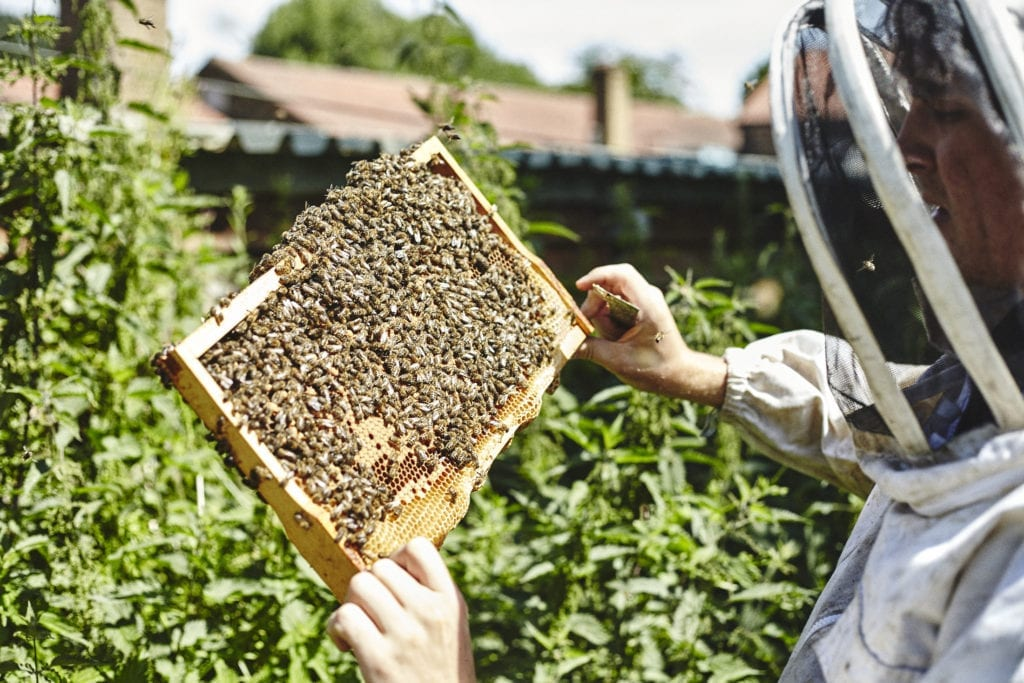 London Beekeeping course