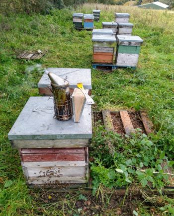 Honeybees for sale