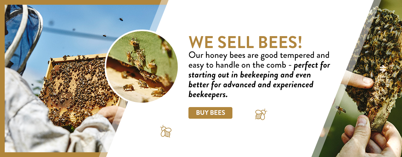 buy bees london